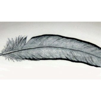 feather-detail